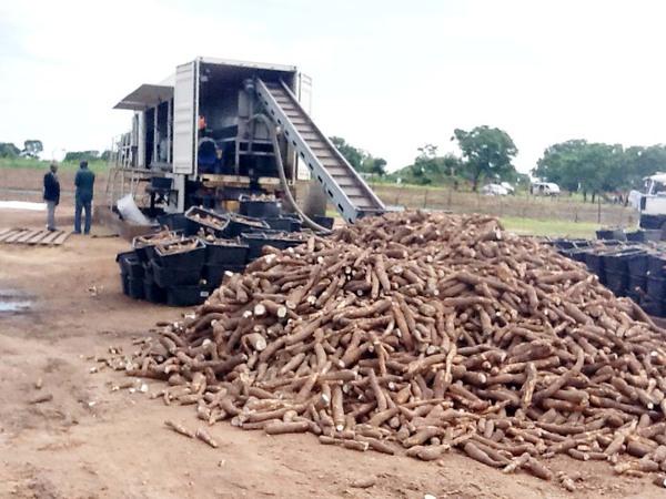 Agriculture: Rivers Government to generate revenue through cassava