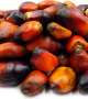 PIND Foundation holds workshop on oil palm seeds linkage